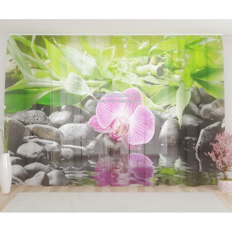 Фототюль Несравненная орхидея