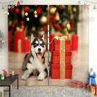 Фотошторы Хаски с подарками